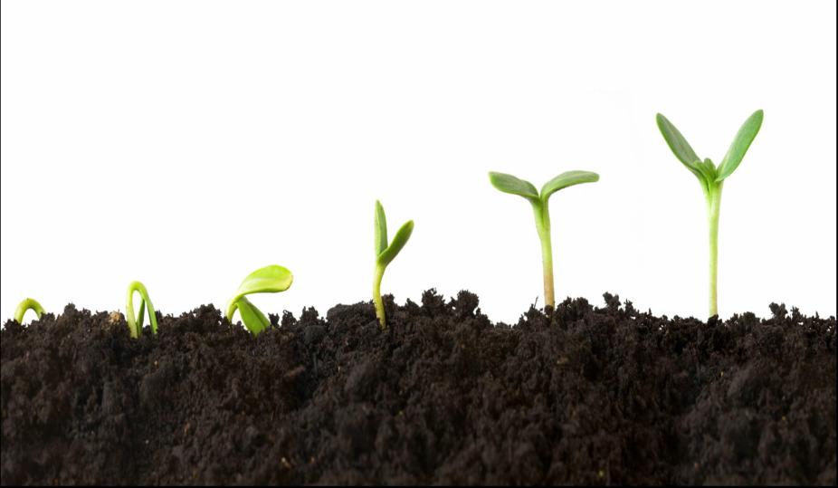 woodlawn christian church growth opportunities